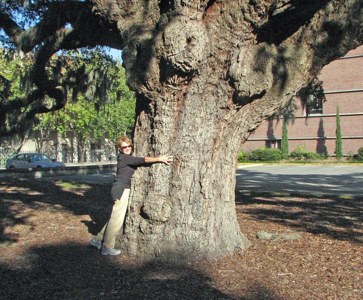 Woman hugging a big tree in Savannah