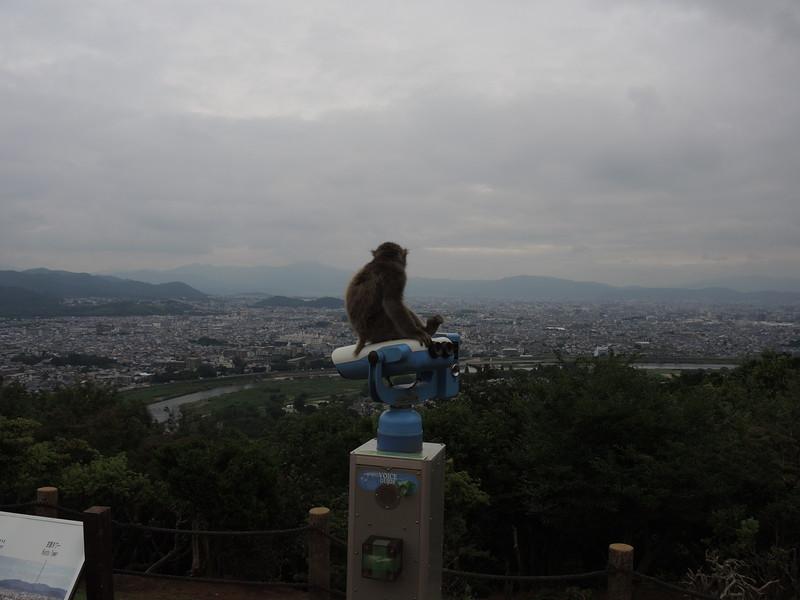 Arashyiama Monkey Park